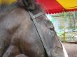 Jízdárna živých koních